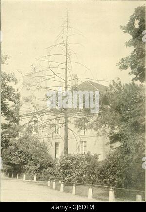 Bulletin du Muséum national d'histoire naturelle (1911) Stock Photo