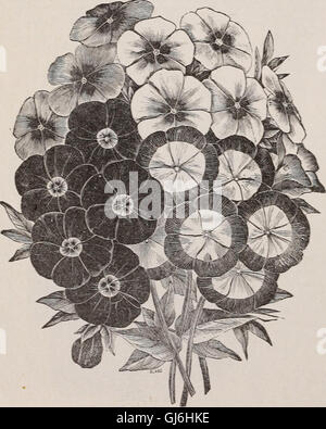 Descriptive catalogue of vegetable, flower, and farm seeds - bulbs, roots, plants, tools (1894) - Stock Photo