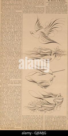 Penman's Art Journal and Teachers' Guide (1885) - Stock Photo