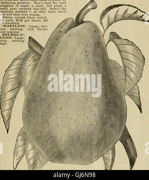 Drumm Seed and Floral Co. - Fall, 1894-5 (1895) - Stock Photo