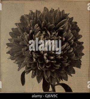 Barnard's seeds, bulbs, shrubs 1919 (1919) - Stock Photo