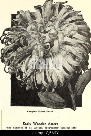 Dreer's wholesale price list - flower seeds for florists plants for florists bulbs for florists vegetable seeds - Stock Photo