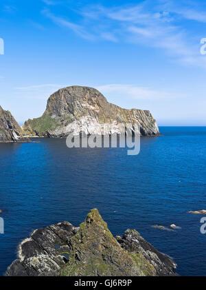 dh FAIR ISLE SHETLAND Sheep top of cliff coast Bight of South ...