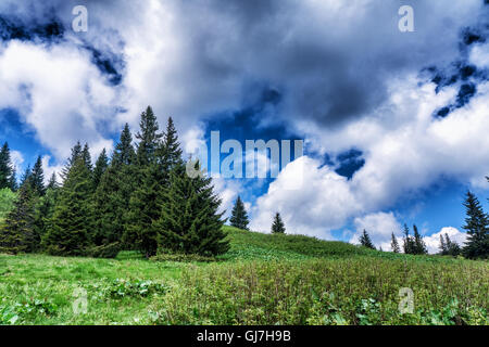 Mountain species on the route to Mount Hoverla - Stock Photo
