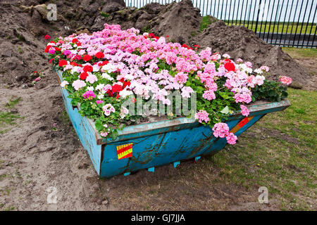 An unusual large scale planting of summer flowers, with Geraniums covering a blue metal builders skip, Southport, - Stock Photo