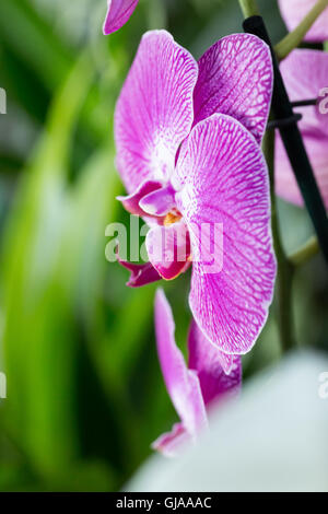 pink orchids close up - photo #36