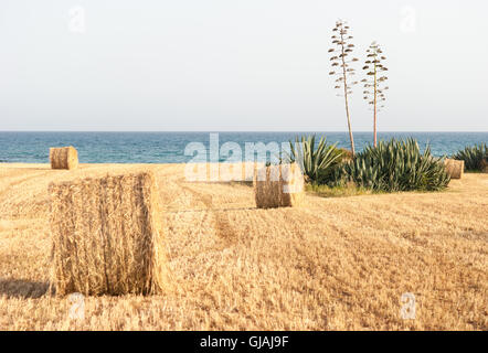 Landscape View Of Straw Fields With Wild Flowers And A