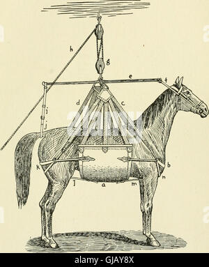Restraint of domestic animals; a book for the use of students and practitioners; 312 illustrations from pen drawings and 26 half tones from original photographs (1909)