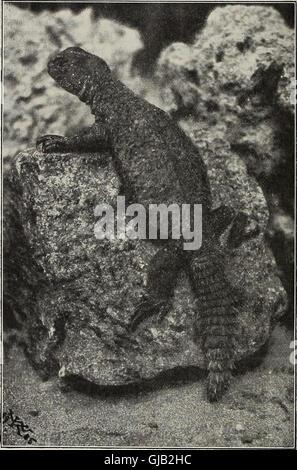 Blätter für Aquarien- und Terrarien-Kunde (1905) - Stock Photo