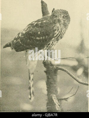 How to attract the birds - and other talks about bird neighbors (1903) - Stock Photo