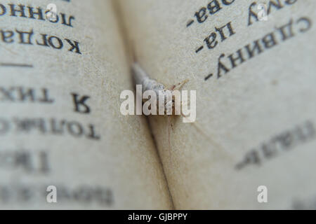 Insect feeding on paper - silverfish. Pest books and newspapers. - Stock Photo