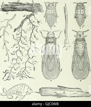 Economic entomology for the farmer and fruit-grower - and for use as a text-book in agricultural schools and colleges - Stock Photo