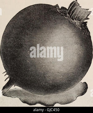 Wholesale price list of vegetable, flower and field seeds (1902) - Stock Photo