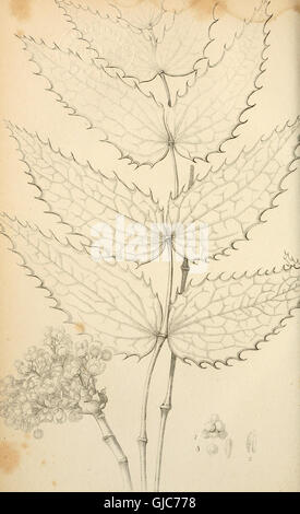 Flora Americae Septentrionalis - or, A systematic arrangement and description of the plants of North America. Containing, - Stock Photo