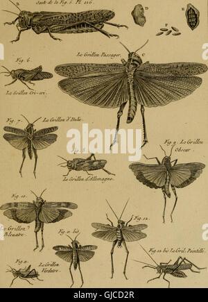 Encyclopédie méthodique - Histoire naturelle (1789) - Stock Photo