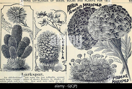Childs' rare flowers, vegetables, and fruits (1897) - Stock Photo