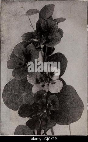 Barnard's seeds, bulbs, shrubs 1922 (1922) - Stock Photo