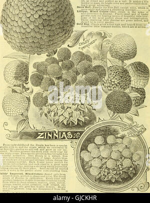 Childs' rare flowers, vegetables, and fruits (1908) - Stock Photo