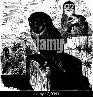 Nests and eggs of North American birds (microform) (1898) - Stock Photo