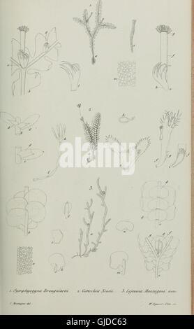 Annales des Sciences Naturelles Botaniques (1843) - Stock Photo