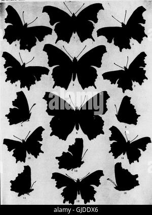 The butterfly book (microform) - a popular guide to a knowledge of the butterflies of North America (1898) - Stock Photo