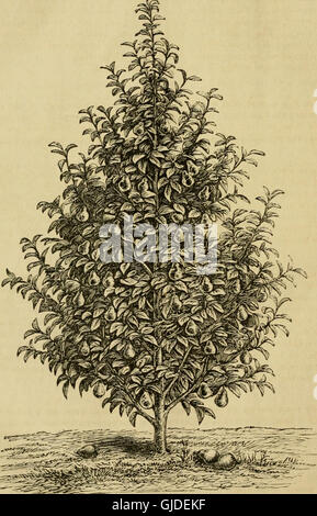 The Horticulturist and journal of rural art and rural taste (1869) - Stock Photo