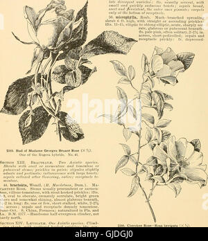 Cyclopedia of American horticulture - comprising suggestions for cultivation of horticultural plants, descriptions - Stock Photo
