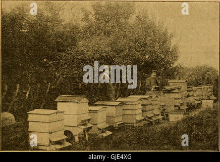 British bee journal and bee-keepers adviser (1900) - Stock Photo