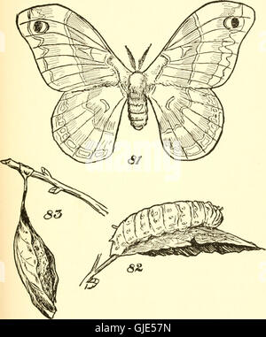 The American boys' book of bugs, butterflies and beetles (1915) - Stock Photo