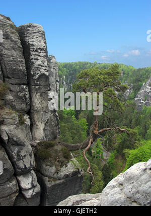 life finds a way - Stock Photo