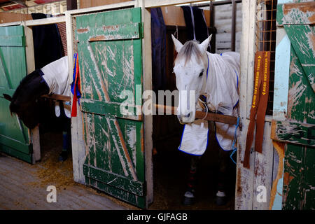 White and brown horses in a stable with a green door - Stock Photo