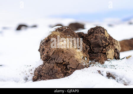 Plowed field with snow, mountain in background, winter landscape - Stock Photo
