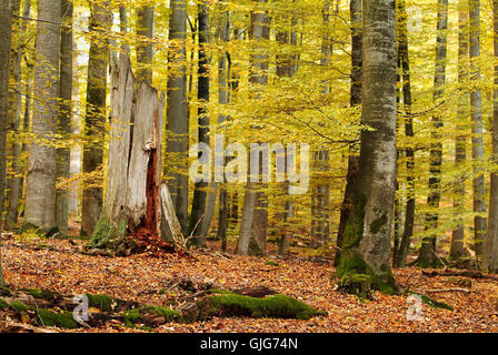 forest in autumn - Stock Photo