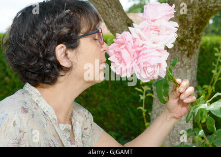a mature woman smelling the rose of her garden - Stock Photo