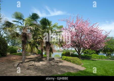 BRD, Deutschland, NRW, Wesseling, Park am Rheinufer - Stock Photo
