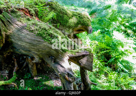 A Tree in the shape of animals - Stock Photo