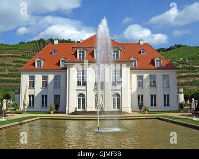 Dresden titmice blue - Stock Photo