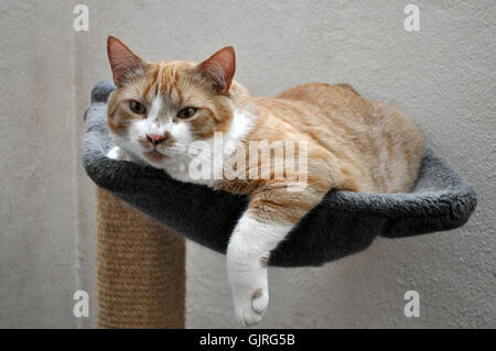 hammock pussycat cat - Stock Photo