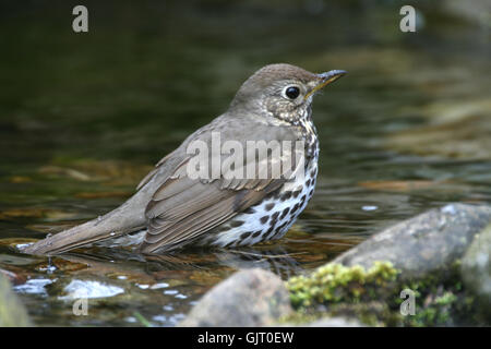 thrush in bathroom - Stock Photo