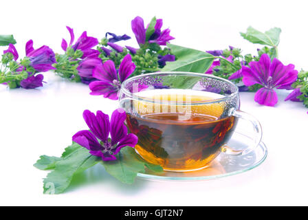 tee malve - tea malva 08 - Stock Photo