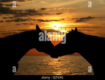 friendship sunset sunrise - Stock Photo