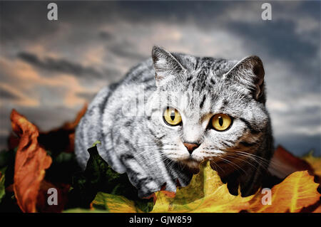 season pussycat cat - Stock Photo