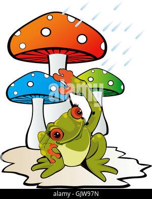 amphibian frog mushroom - Stock Photo