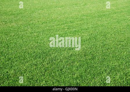 field small tiny - Stock Photo