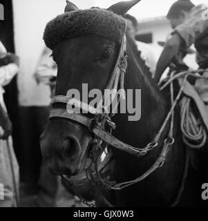 Auf dem Viehmarkt, Kolumbien 1960er Jahre. On the cattle market, Colombia 1960s. - Stock Photo