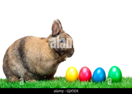 rabbits with easter eggs in green meadow - Stock Photo
