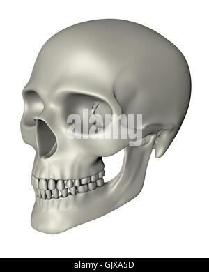 Human Skull - Oblique Projection - Stock Photo