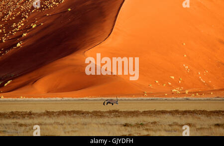 desert wasteland dunes - Stock Photo