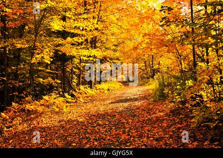 tree trees leaves - Stock Photo