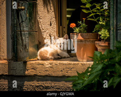 Sleepy light brown kitten sitting on a sunny window ledge. - Stock Photo